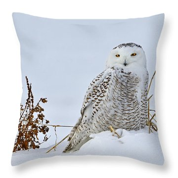 Everywhere Throw Pillow by Tony Beck