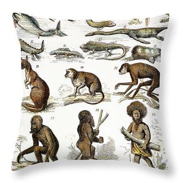 Evolution Chart Throw Pillow by Granger