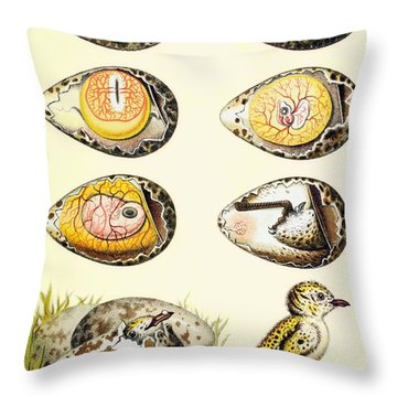Evolution Of A Chicken Within An Egg Throw Pillow