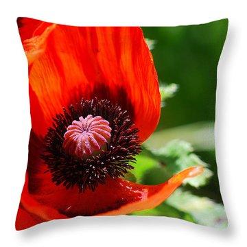 #evolve Throw Pillow by Becky Furgason