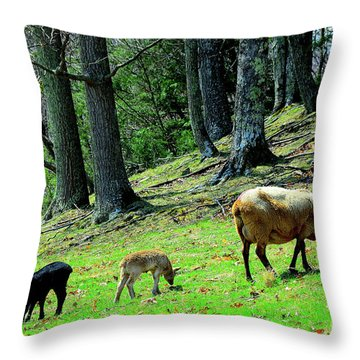 Ewe And Spring Lambs Grazing Throw Pillow by Thomas R Fletcher