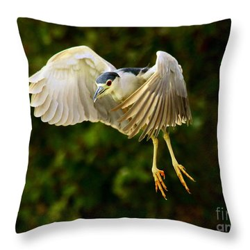 Excited Black Crowned Night Heron Throw Pillow by Myrna Bradshaw