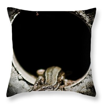Throw Pillow featuring the photograph Exit Of Lizard Devil by Stwayne Keubrick