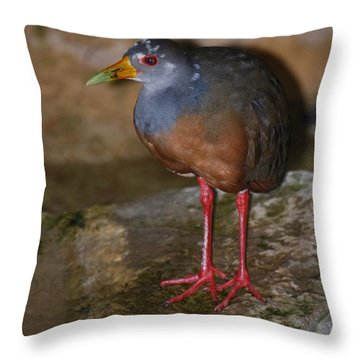 Throw Pillow featuring the photograph Exotic Bird by Ramona Whiteaker