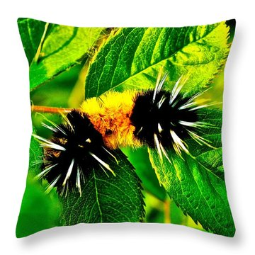 Exploring Possibilities Throw Pillow