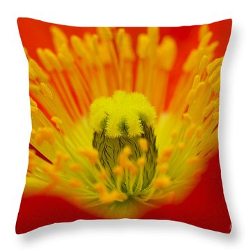 Explosion Of Colour Throw Pillow by Carole Lloyd
