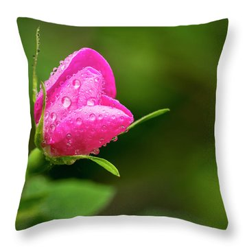 Extreme Close Up Of A Wild Rose Bud Throw Pillow