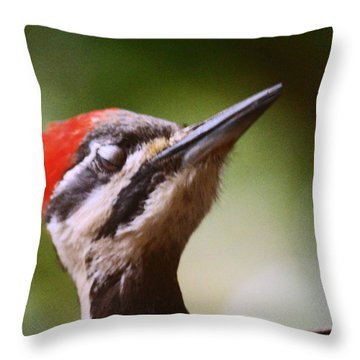 Eye Am Getting Very Sleepy Throw Pillow by Kym Backland