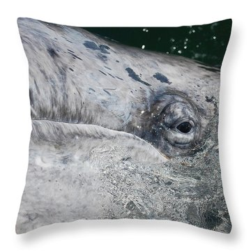 Eye Of A Young Gray Whale Throw Pillow by Don Schwartz