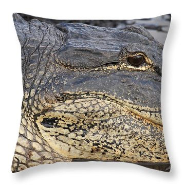 Eye Of The Gator Throw Pillow by Adam Jewell