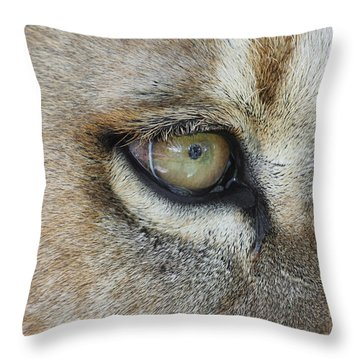 Throw Pillow featuring the photograph Eye Of The Lion by Judy Whitton