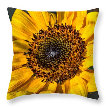 Eye Of The Sun Throw Pillow by Michael Moriarty
