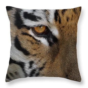 Eye Of The Tiger Throw Pillow by Ernie Echols
