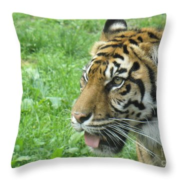 Throw Pillow featuring the photograph Eye Of The Tiger by Lingfai Leung