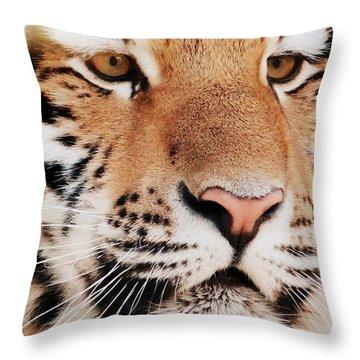 Eye Of The Tiger Throw Pillow by Ramona Johnston