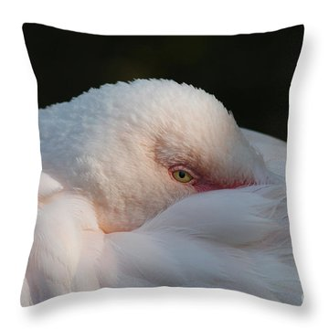 Eye On You Throw Pillow by Judy Whitton