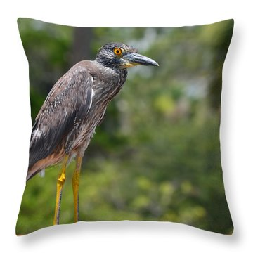 Throw Pillow featuring the photograph Eye To Lens by DigiArt Diaries by Vicky B Fuller