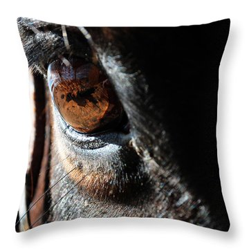 Throw Pillow featuring the photograph Eyeball Reflection by Susie Rieple