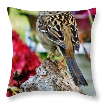 Throw Pillow featuring the photograph Eyeing The Sparrow by VLee Watson