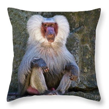 Eyes Front Throw Pillow by Heiko Koehrer-Wagner