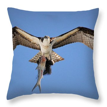 Eye's In The Sky Throw Pillow by Quinn Sedam