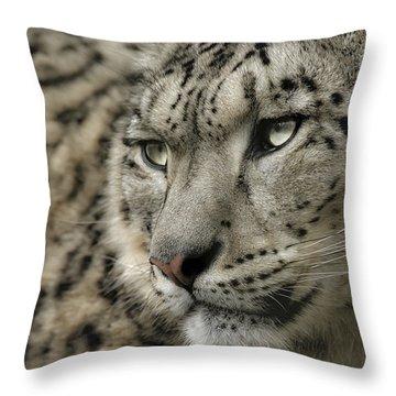 Eyes Of A Snow Leopard Throw Pillow