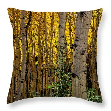 Throw Pillow featuring the photograph Eyes Of The Forest by Ken Smith