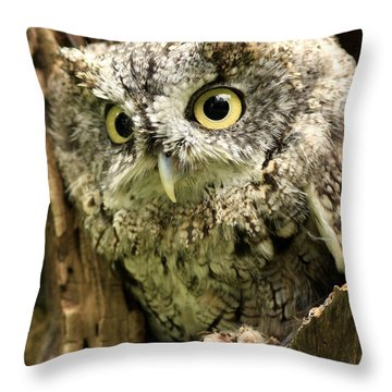 Eyes Of Wisdom Eastern Screech Owl In Hollow Tree Throw Pillow by Inspired Nature Photography Fine Art Photography