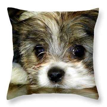 Eyes On You Throw Pillow by Karen Wiles