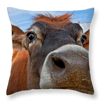 Face Of Young Jersey Cow Heifer Throw Pillow