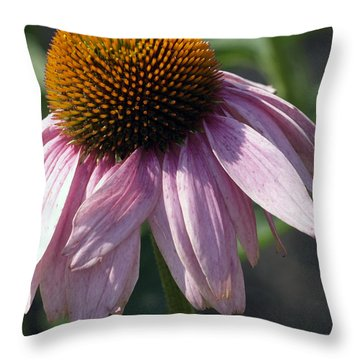 Fading Coneflower Throw Pillow