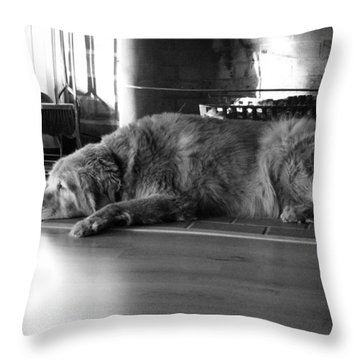 Throw Pillow featuring the photograph Faithful by Meaghan Troup