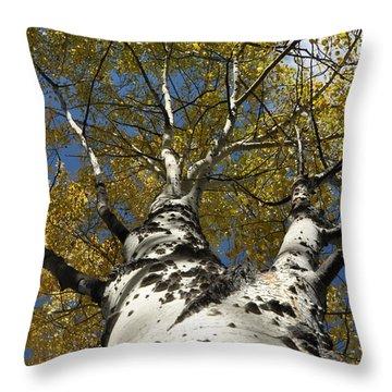 Fall Aspen Throw Pillow