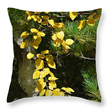 Throw Pillow featuring the photograph Fall Birch by Judy  Johnson