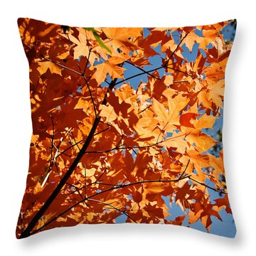Throw Pillow featuring the photograph Fall Colors 2 by Shane Kelly