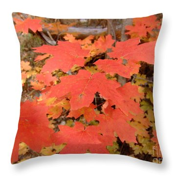 Fall Colors 6308 Throw Pillow