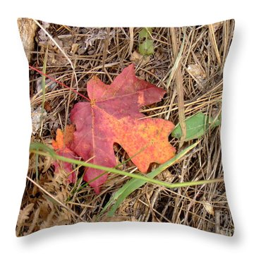 Fall Colors 6312 Throw Pillow