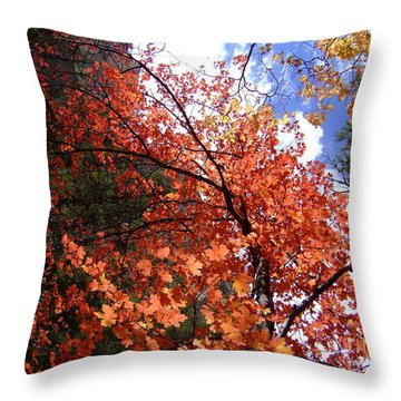 Fall Colors 6340 Throw Pillow