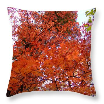 Fall Colors 6359 Throw Pillow