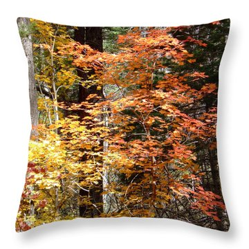 Fall Colors 6412 Throw Pillow