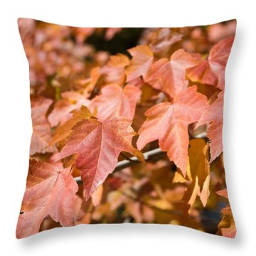 Throw Pillow featuring the photograph Fall Colors by Shane Kelly