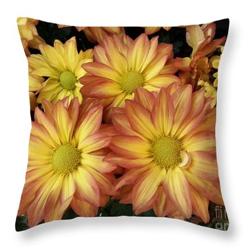 Fall Daisies Throw Pillow by Donna Brown