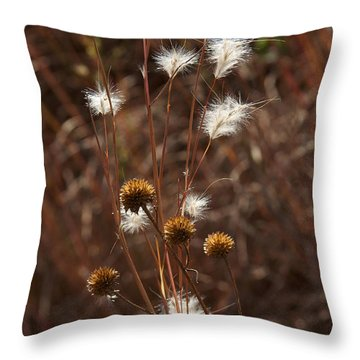 Throw Pillow featuring the photograph Fall Feathers by Jane Eleanor Nicholas
