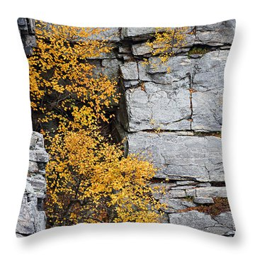 Fall Foliage Colors 01 Throw Pillow