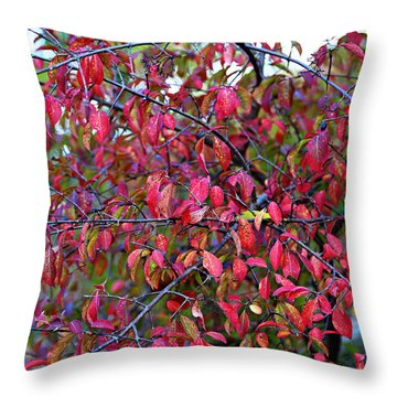 Fall Foliage Colors 05 Throw Pillow