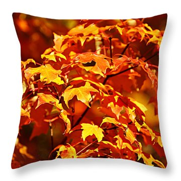 Fall Foliage Colors 14 Throw Pillow