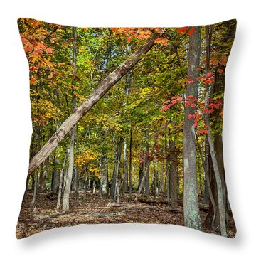 Fall Forest Throw Pillow by David Cote