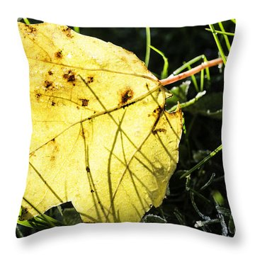 Fall Frost Throw Pillow by Thomas R Fletcher