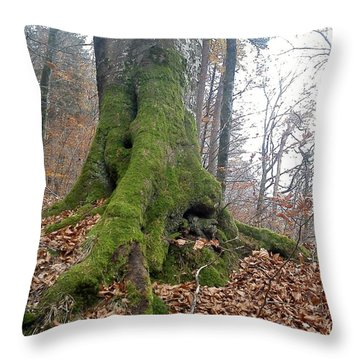 Throw Pillow featuring the photograph Fall In Burgdorf by Felicia Tica