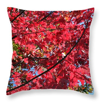 Throw Pillow featuring the photograph Fall In Illinois by Debbie Hart